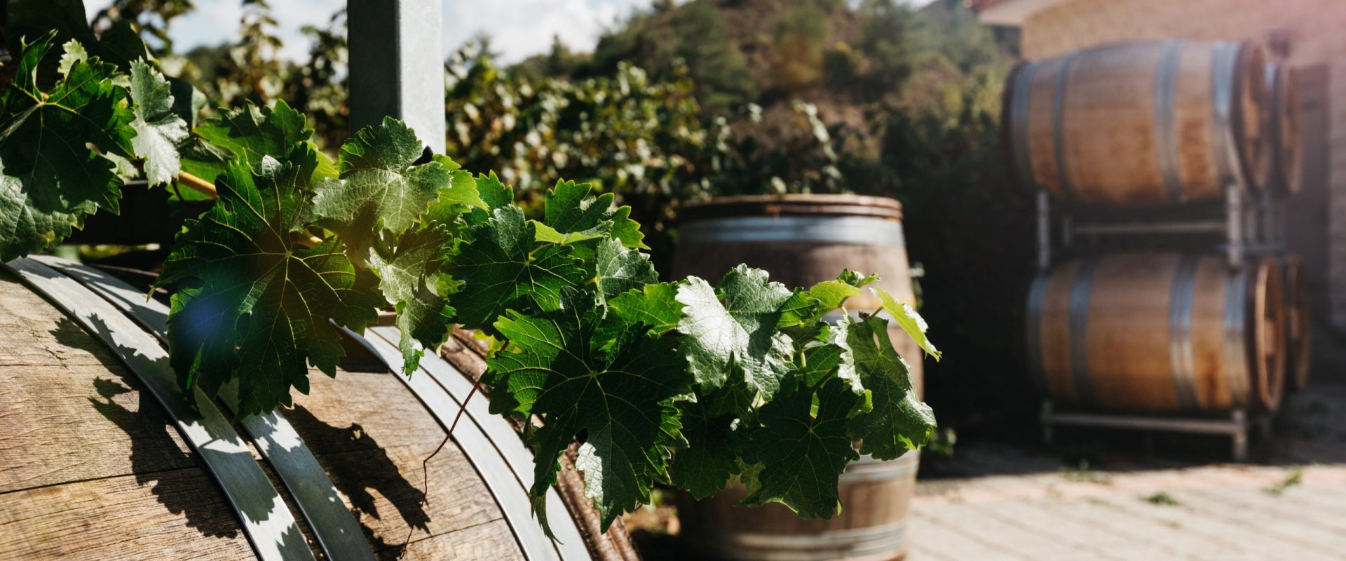 Cyprus winery