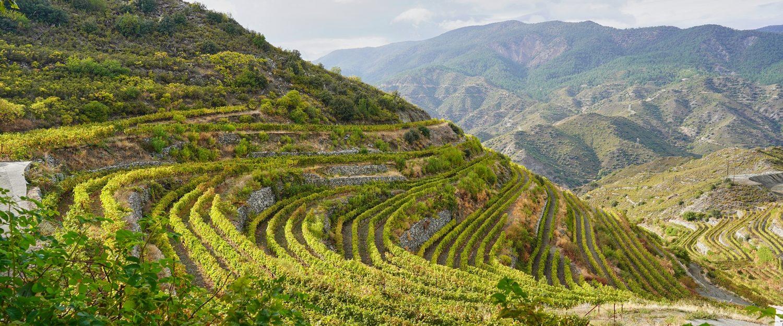 Winery Troodos